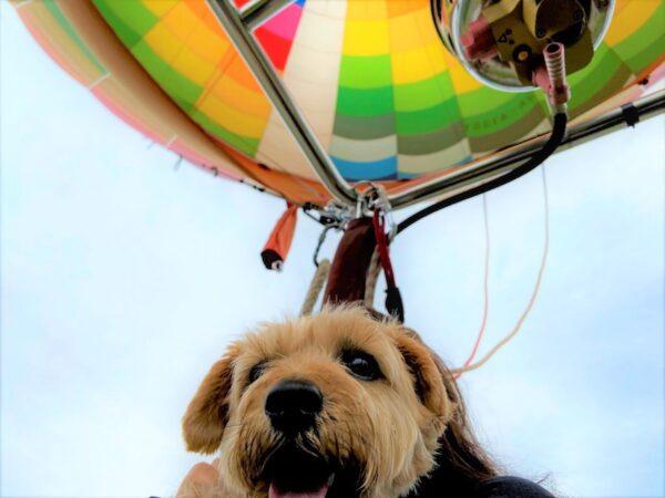 白馬 気球 犬